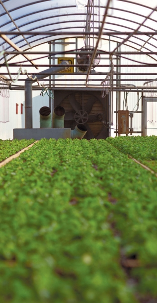 Inside one of Folsom & Pine's greenhouses with rows of microgreens