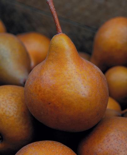 european pears, the fruit of venus