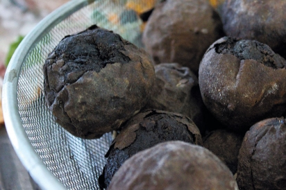 Black walnuts and black eyed Susans in Celeste's studio.