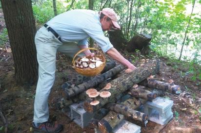 Peter Kuhlman harvesting shiitake mushrooms off logs at the farm at Blue Owl Hollow.
