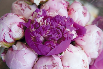 Peonies from Red Twig Farm