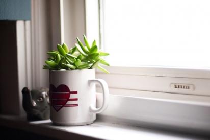 A succulent soaks up ample sunlight.
