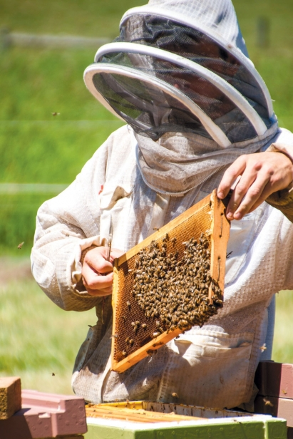 Marlyn Miller, Dwight's Amish mentee, examines hives for any problems