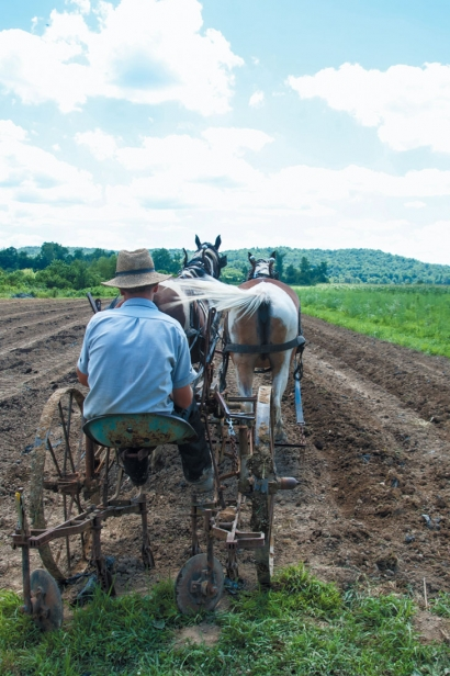 One of the Amish workers on Eli's farm uses a horse cart to lay rows in the soil to prepare for planting