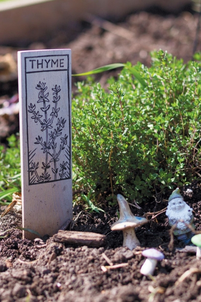 hayden's homegrown thyme plant