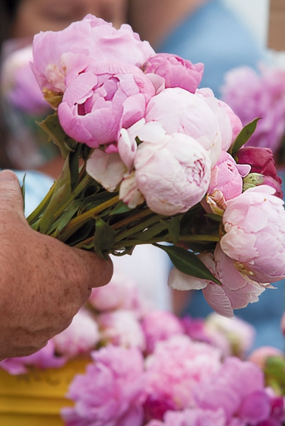 Peonies for sale from Red Twig Farms at the Worthington farmers market