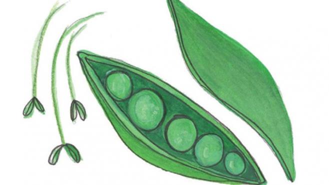 english peas illustration
